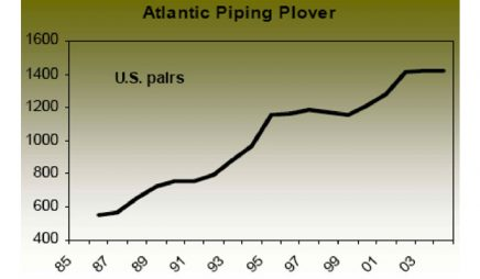 Atlantic piping plover recovery trends