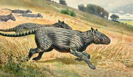 Phenacodus, a sheep-sized herbivore found in the Eocene era