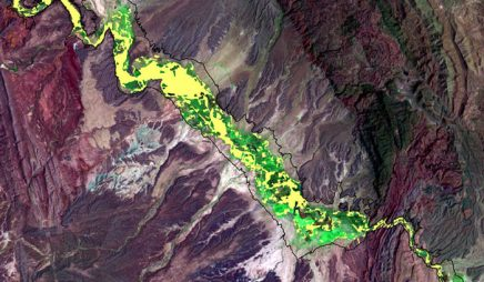 Landsat image of invasive salt cedar, 2002