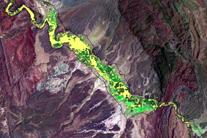 Landsat image of invasive salt cedar, 2002