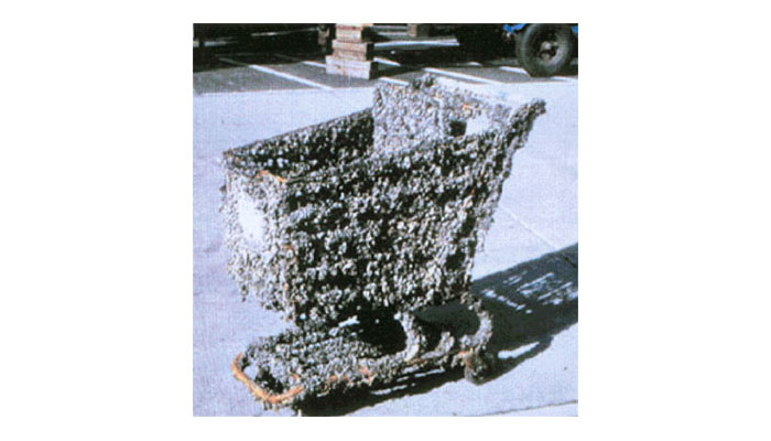 Colonization by zebra mussels, Great Lakes
