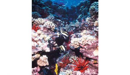 Coral reef in the Hawaiian islands